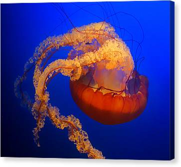 Jelly #4 Canvas Print
