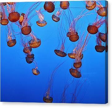 Jelly Dive Canvas Print by Ashley Van Artsdalen