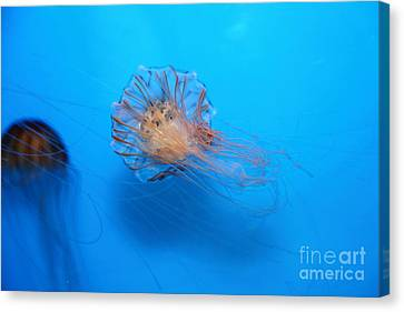 Jelly Fish 5d24944 Canvas Print by Wingsdomain Art and Photography