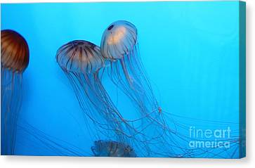 Jelly Fish 5d24945 Canvas Print by Wingsdomain Art and Photography