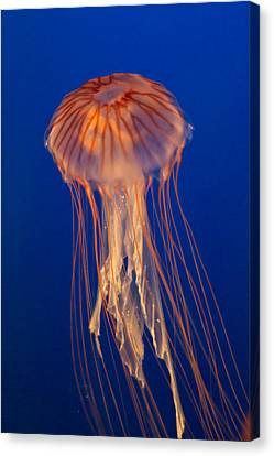 Canvas Print featuring the photograph Jelly Fish by Eti Reid