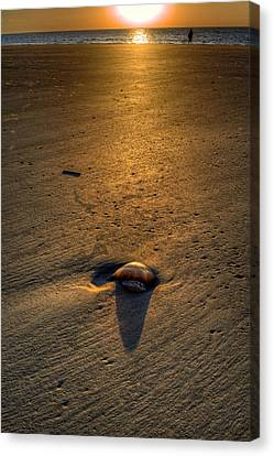 Chrystal Canvas Print - Jelly On Jekyll Island by Greg and Chrystal Mimbs