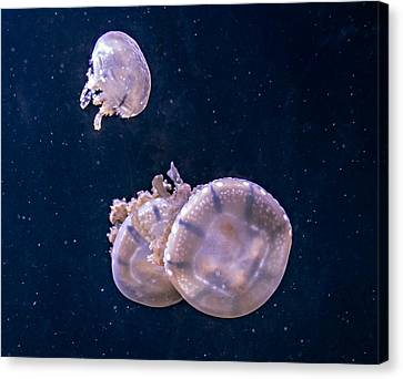 Jellyfish 2 Canvas Print by Steve Harrington