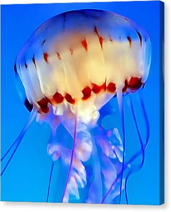 Jellyfish 3 Canvas Print by Dawn Eshelman