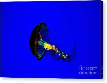 Jellyfish Canvas Print by Angelika Bentin
