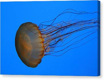 Jellyfish - National Aquarium In Baltimore Md - 121227 Canvas Print by DC Photographer