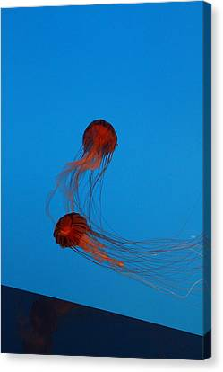 Jellyfish - National Aquarium In Baltimore Md - 121229 Canvas Print by DC Photographer