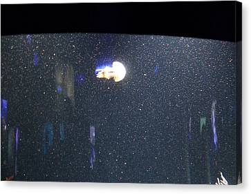 Jellyfish - National Aquarium In Baltimore Md - 121234 Canvas Print by DC Photographer