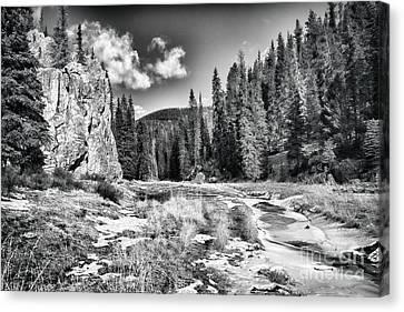 Jemez Mountain Spring-black And White Canvas Print by Douglas Barnard
