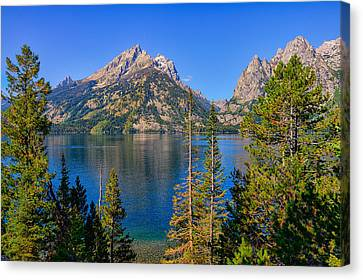 Jenny Lake Overlook Canvas Print by Greg Norrell