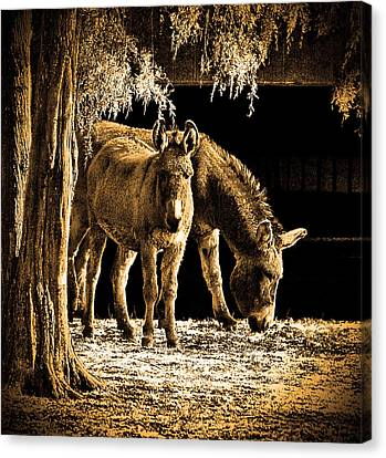 Jenny N Jack Canvas Print by Robert Geary