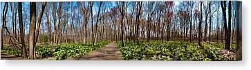 Canvas Print featuring the photograph Jersey Swamp  by Robert Culver