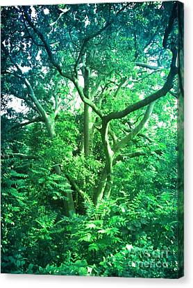 Canvas Print featuring the photograph Jersey Tree by Denise Tomasura