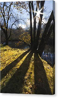 Jewel In The Trees Canvas Print by Debra and Dave Vanderlaan