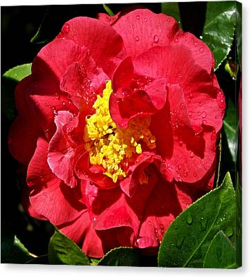 Jeweled Camellia Canvas Print by Michele Myers