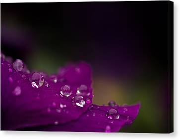 Jewels On Purple Canvas Print by Shane Holsclaw