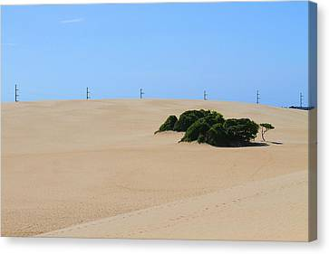 Sand Dunes Canvas Print - Jockey's Ridge 27 by Cathy Lindsey