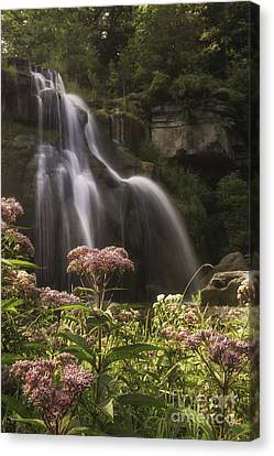 Joe Pye Weed For Pat Canvas Print