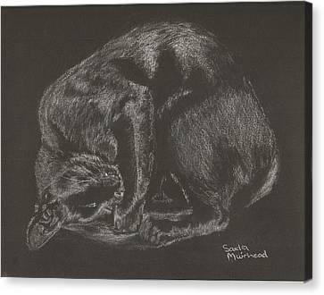 joe Canvas Print