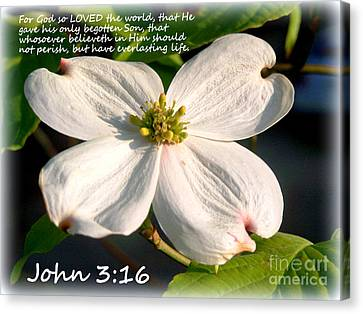 John 3-16/dogwood Legend Canvas Print by Kathy  White