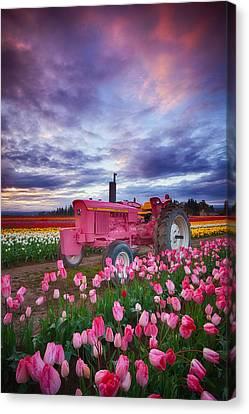 Pink Tulip Canvas Print - John Deere Pink by Darren  White