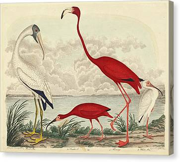 John G. Warnicke After Alexander Wilson, Wood Ibis, Scarlet Canvas Print