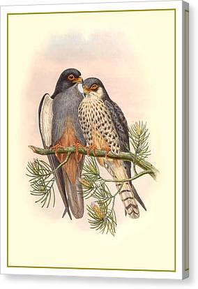 John Gould Birds Canvas Print by Gary Grayson