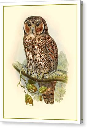 John Gould Owl Canvas Print by Gary Grayson