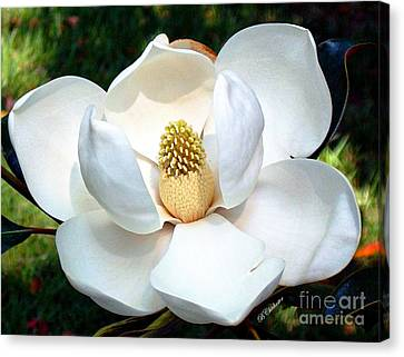 Canvas Print featuring the photograph John's Magnolia by Barbara Chichester
