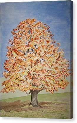 Jolanda's Maple Tree Canvas Print