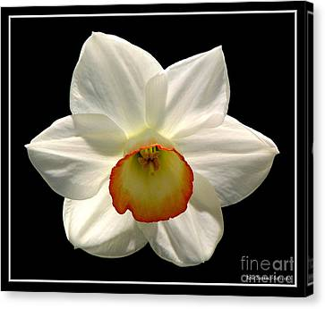 Canvas Print featuring the photograph Jonquil 1 by Rose Santuci-Sofranko