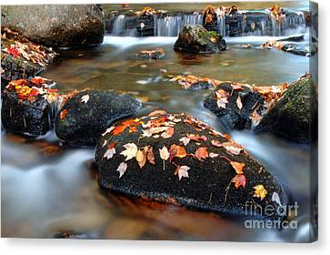 Jordan Stream  Canvas Print by Matthew Yeoman
