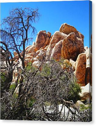Joshua Tree - 06 Canvas Print by Gregory Dyer