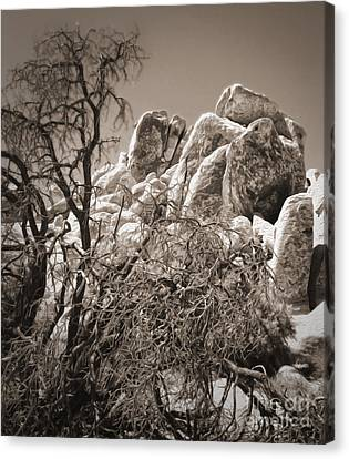 Joshua Tree - 07 Canvas Print by Gregory Dyer