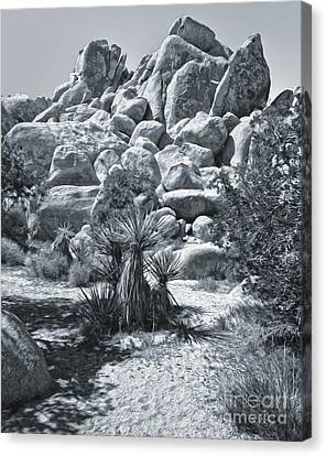 Joshua Tree - 09 Canvas Print by Gregory Dyer