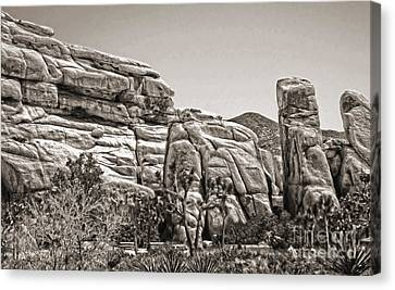 Joshua Tree - 11 Canvas Print by Gregory Dyer