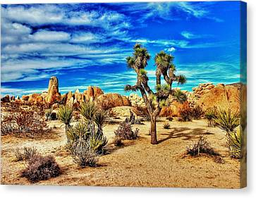 Canvas Print featuring the photograph Joshua Tree by Benjamin Yeager