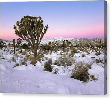 Joshua Tree In Snow Canvas Print