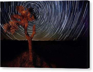 Joshua Tree Star Trails Canvas Print