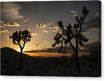 Joshua Tree Sunset Silhouette 2 Canvas Print by Lee Kirchhevel
