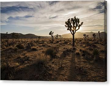 Joshua Tree Sunset Silhouette Canvas Print by Lee Kirchhevel