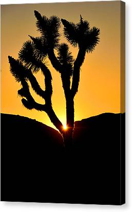 Joshua Tree Sunset Canvas Print