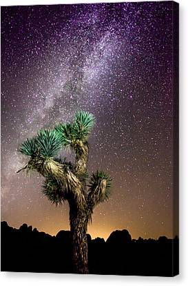 Canvas Print featuring the photograph Joshua Tree Vs The Milky Way by Robert  Aycock