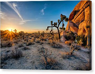 Joshua's Sunset Canvas Print by Peter Tellone