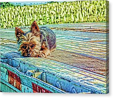 Canvas Print featuring the photograph 'jovie' Truckin Dog's Need Breaks Too by Robert Rhoads