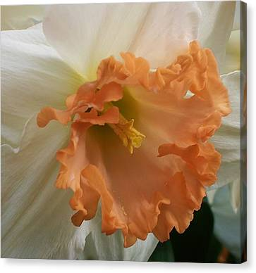 Joy Of Spring Canvas Print by Bruce Bley