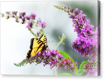 Joy Of Summer Canvas Print by Lila Fisher-Wenzel