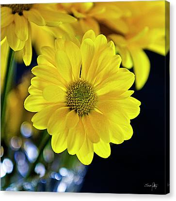 Joy Canvas Print by Scott Pellegrin