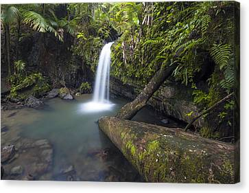 Juan Diego Falls Canvas Print by Patrick Downey