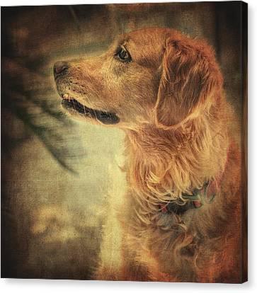 Scottish Dog Canvas Print - Golden Retriever by Taylan Apukovska